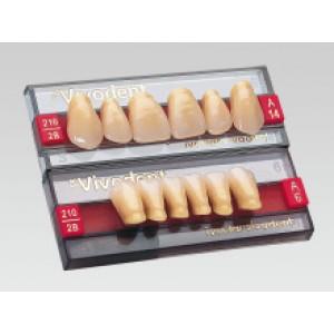Зубы Ivocryl 6 зубов в планке  A-D фронтальные верхние 10 A1